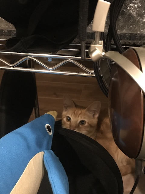 猫のおもちゃ けりぐるみ