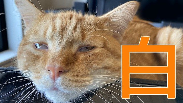白目で寝る猫