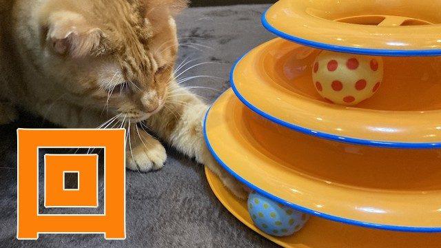 回転ボールおもちゃで遊ぶ猫
