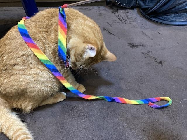 紐の猫じゃらし