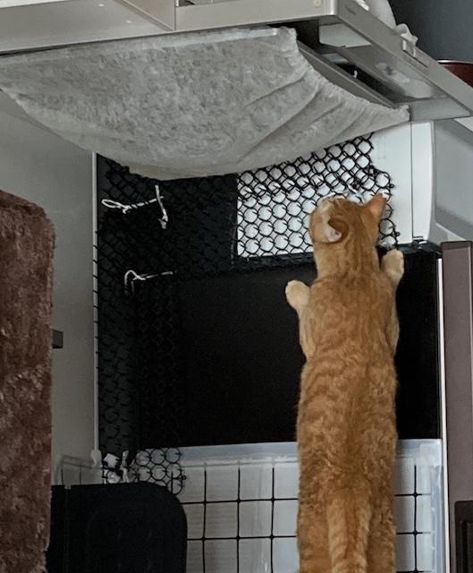 換気扇と猫