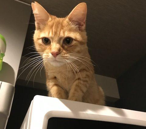 高いところに登る猫