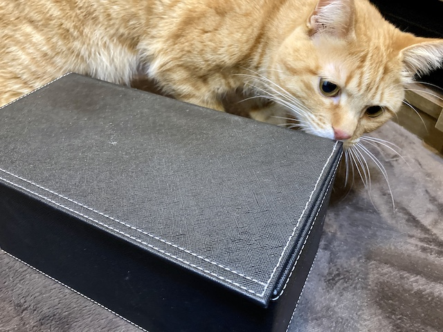 ティッシュ猫