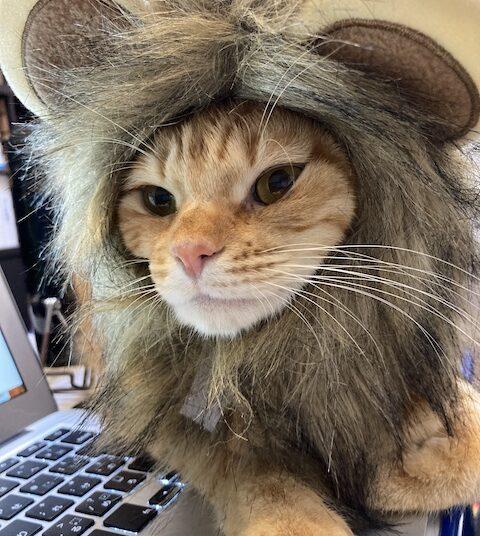 茶トライオン