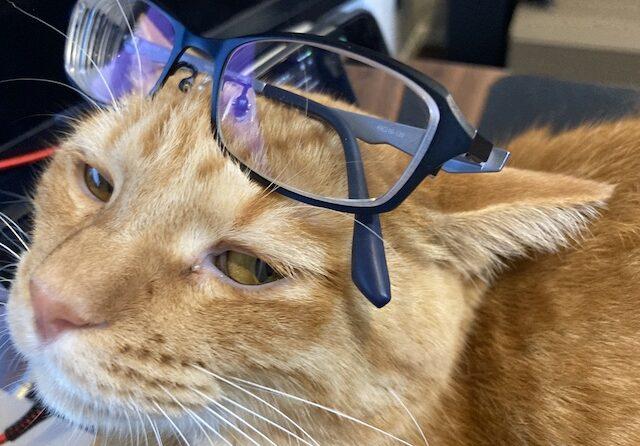プリズム眼鏡