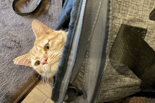 猫キャリーバッグ